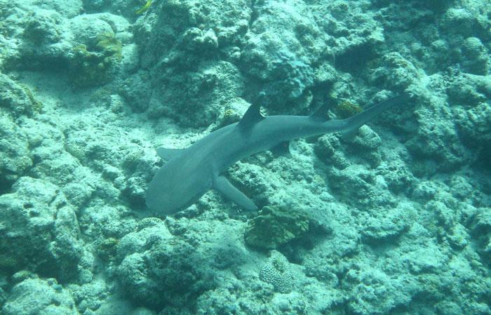 サメを遠方からこっそり眺める